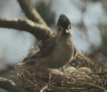 Axa 'Nest'