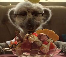Meerkat Meals 'Two Spoons'